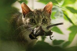CATbirdcatch